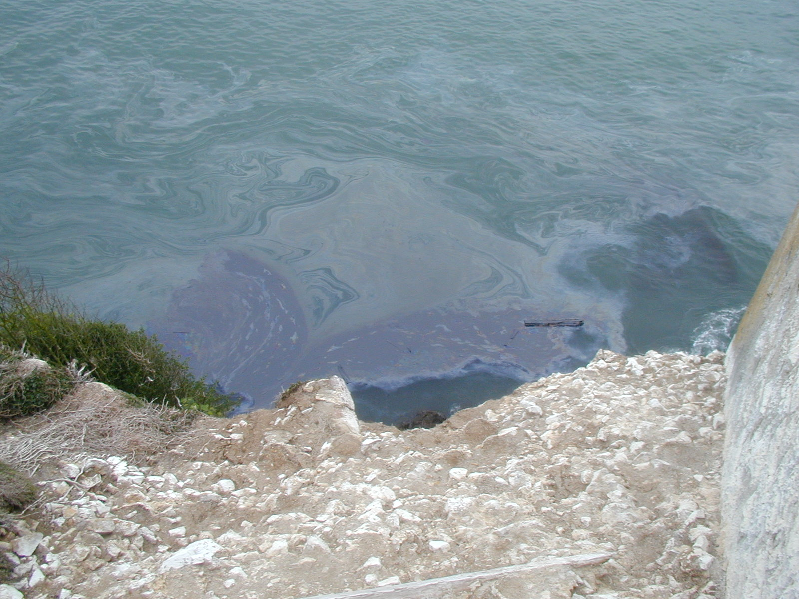Oil Spill near Alcatraz Island.  Courtesy of FWS.