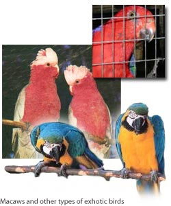 Macaws and other types of exhotic birds.