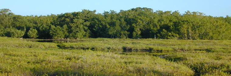 Looking northward at a coastal salt marsh crossed with drainage creeks at the Everglades National Park.  Courtesy of USGS.