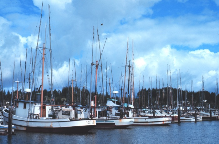 Fishing fleet at Blaine, Washington.  Courtesy of NOAA.