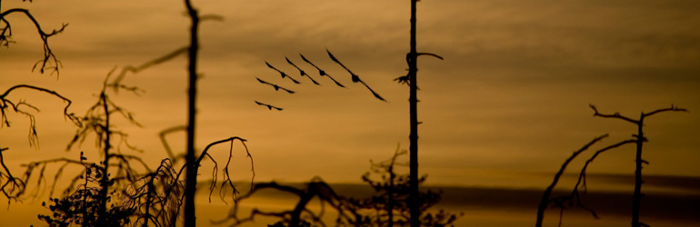 Several birds fly in formation through the marsh as dawn approaches.  Courtesy of NPS.