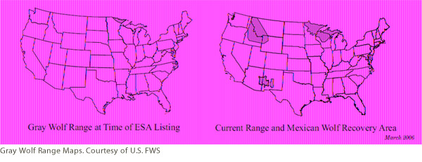 Gray Wolf Range Maps. Courtesy of U.S. FWS
