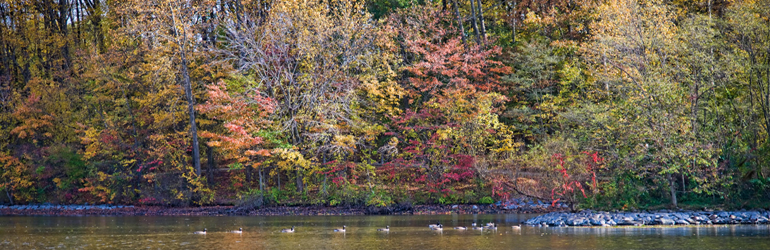 A scenic view of ducks crossing a river. Courtesy of Jeff Bank (DOJ)