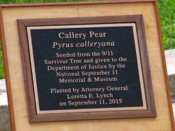 The commemorative plague that stands before the Callery Pear Tree to remind us of the threats from foreign terrorists similar to those involved on September 11 as one we must constantly guard against.