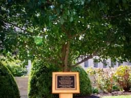 """The Callery Pear tree, a descendent of a tree at Ground Zero, became known as the """"Survivor Tree"""" after standing through the terror attacks on the World Trade Center. In 2015, the department dedicated the planting of this Survivor Tree seedling. The following year, Attorney General Loretta Lynch dedicated a commemorative plaque for the tree."""