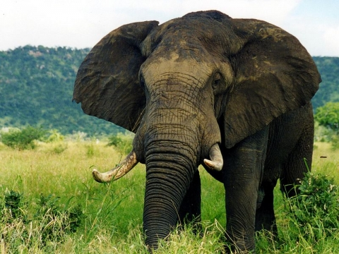 photograph of elephant