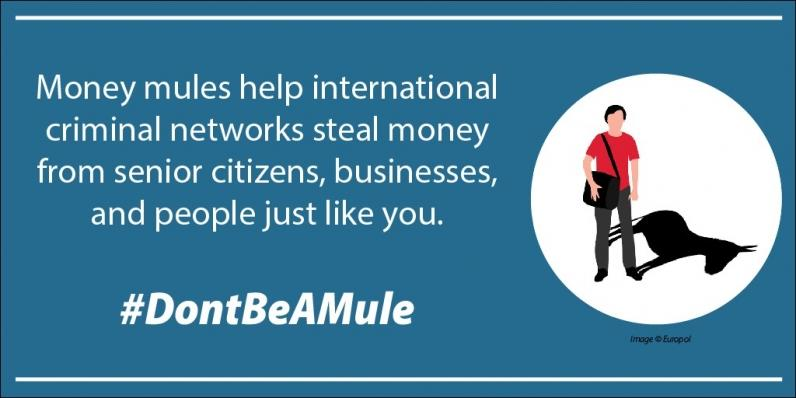 Money mules help international criminal networks steal money from senior citizens, businesses, and people just like you.