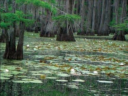 Shreveport Caddo Lake
