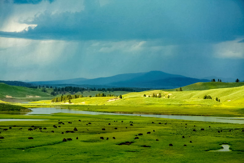 Idaho Green Pasture