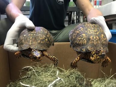 Turtles 01