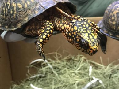 Turtles 02