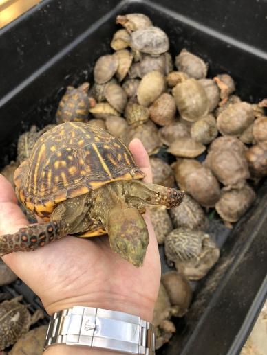 Turtles 04
