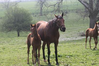Picture of Kentucky Horses