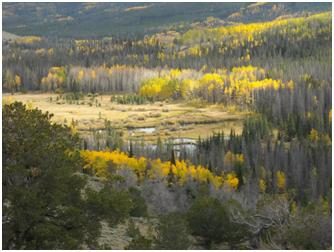 Fall Color near Encampment, Wyoming, Courtesy of USAO Staff